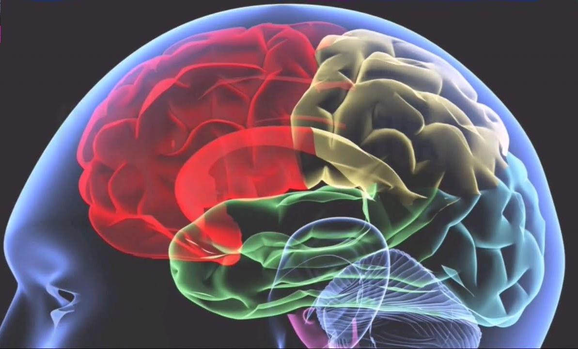 6 Foods That Boost Brain Power