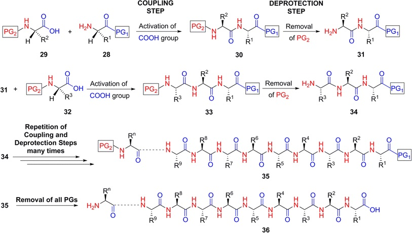 Things to know about peptide synthesis