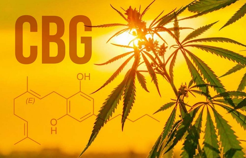 CBG Rolls and its Medical benefits you need to know