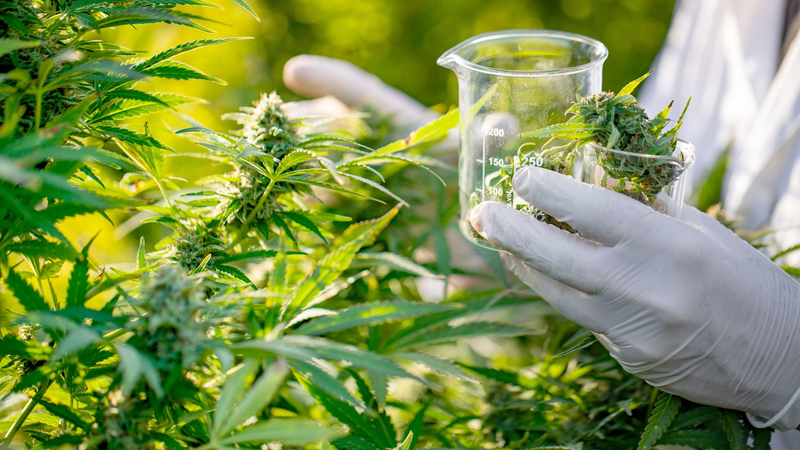 How to cure stress problems with cannabis in 2021?